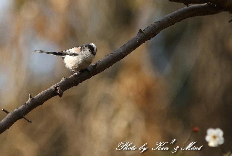 公園で会えた 鳥さんたち♪_e0218518_15164030.jpg
