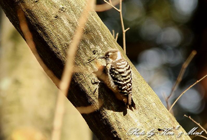 公園で会えた 鳥さんたち♪_e0218518_15171430.jpg