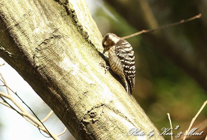 公園で会えた 鳥さんたち♪_e0218518_15174761.jpg