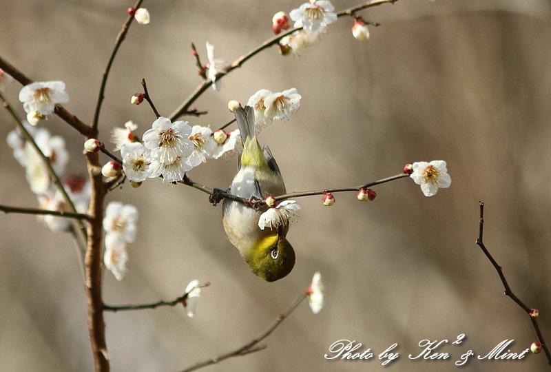 公園で会えた 鳥さんたち♪_e0218518_15183050.jpg