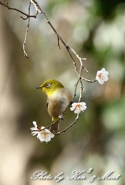 公園で会えた 鳥さんたち♪_e0218518_15190160.jpg