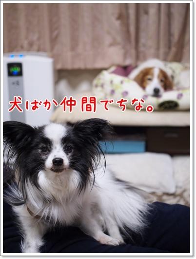 d0013149_01185467.jpg