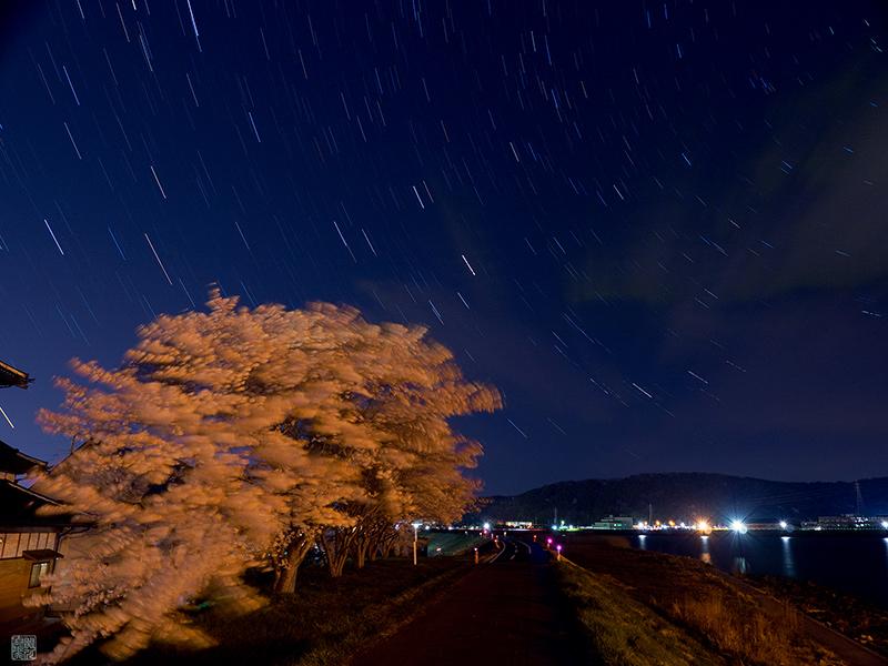 石巻の桜_a0003650_23104261.jpg
