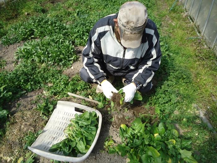 農作業はじめ・・_a0199979_15510105.jpg