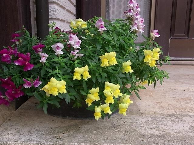 春の花_e0158687_18124743.jpeg