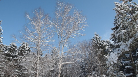 なごり雪かな?_b0343293_22394627.jpg