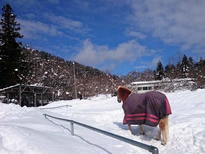 雪、そろそろ終わって!_e0186499_20291475.jpg