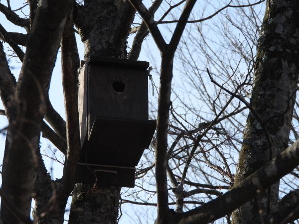 鳥の巣箱を設置しました_b0174425_15482460.jpg