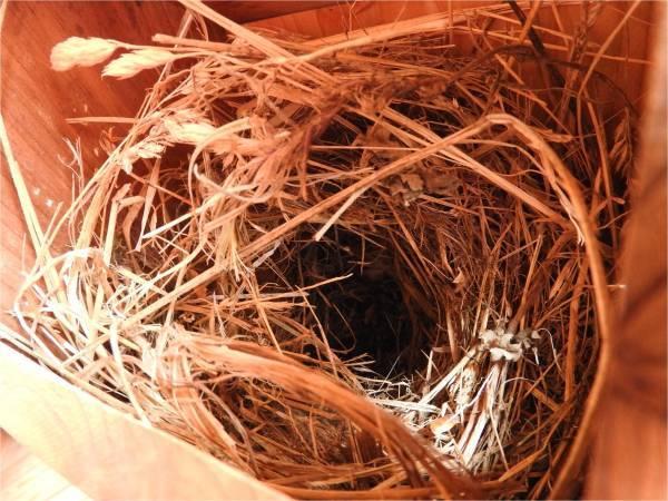 鳥の巣箱を設置しました_b0174425_15555803.jpg