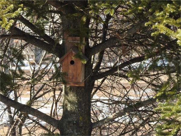 鳥の巣箱を設置しました_b0174425_15595328.jpg