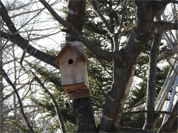 鳥の巣箱を設置しました_b0174425_16000440.jpg