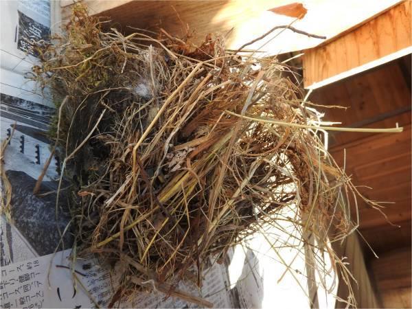 鳥の巣箱を設置しました_b0174425_16000985.jpg