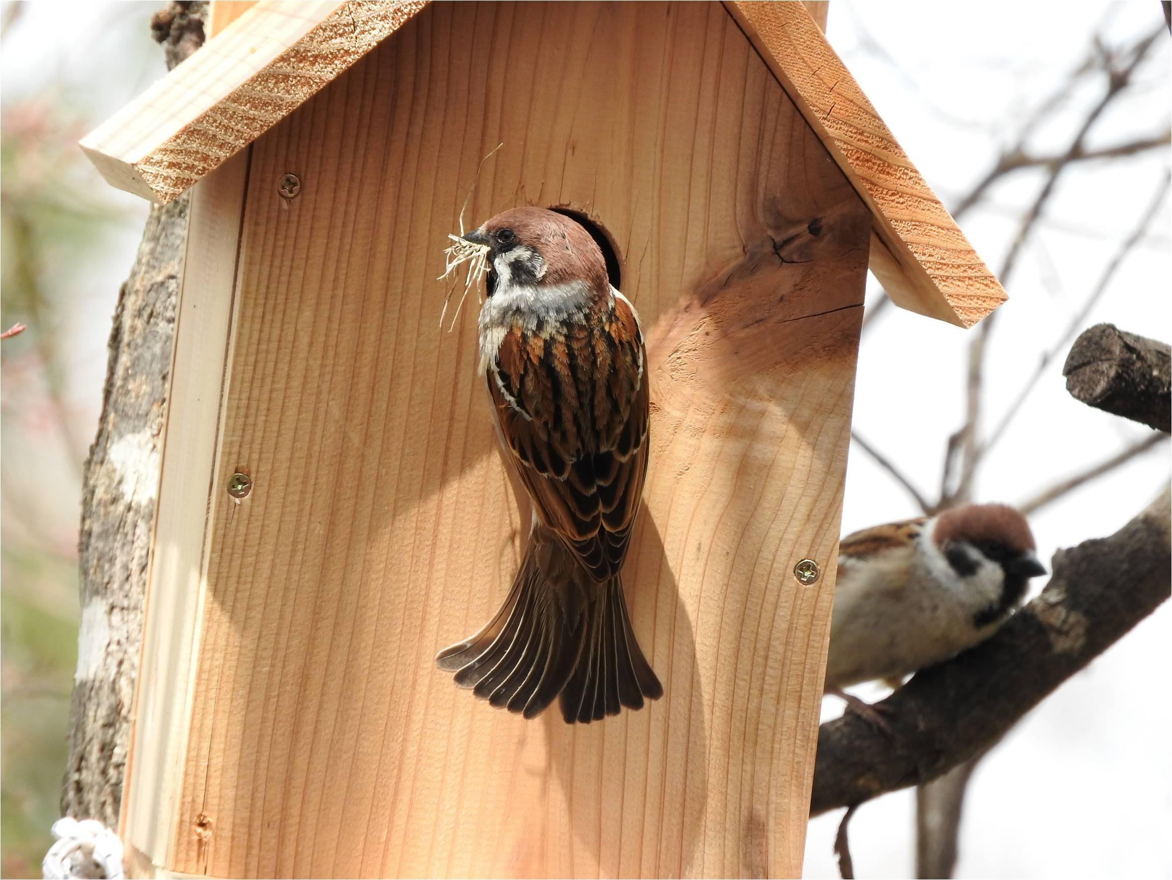 鳥の巣箱を設置しました_b0174425_16255827.jpg