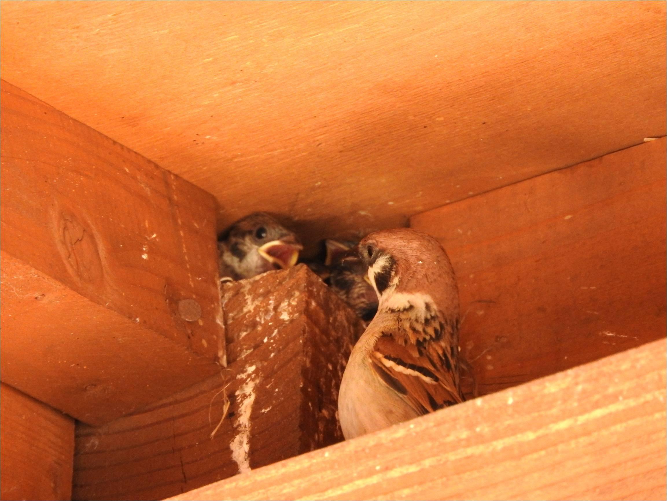 鳥の巣箱を設置しました_b0174425_16265864.jpg