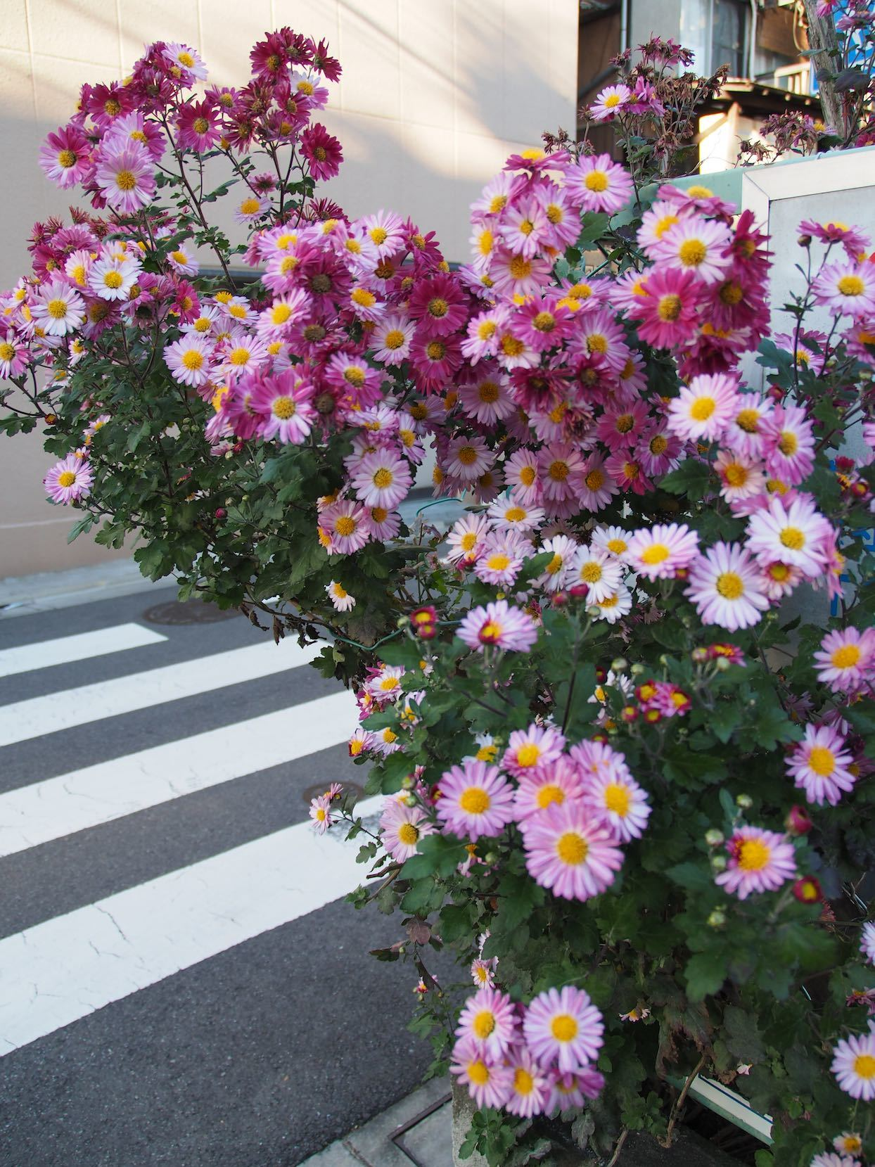 東急多摩川駅周辺5_b0360240_19253538.jpg