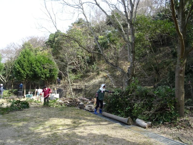 活き活きと伐採作業・・・うみべの森_c0108460_18003877.jpg