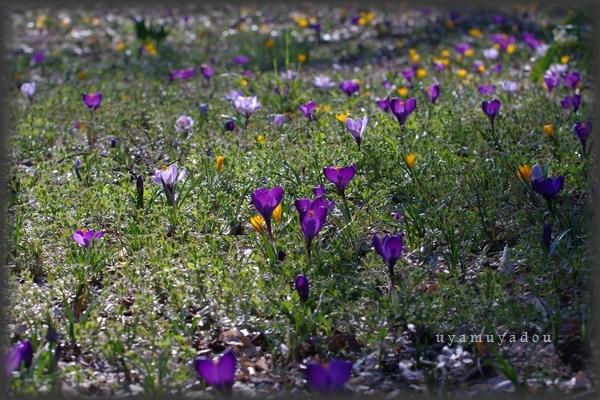 春の日曜日_a0157263_19133237.jpg