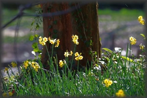 春の日曜日_a0157263_19133251.jpg