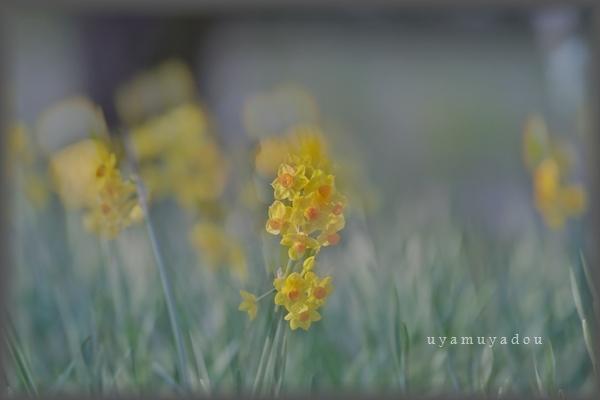 春の日曜日_a0157263_19133270.jpg