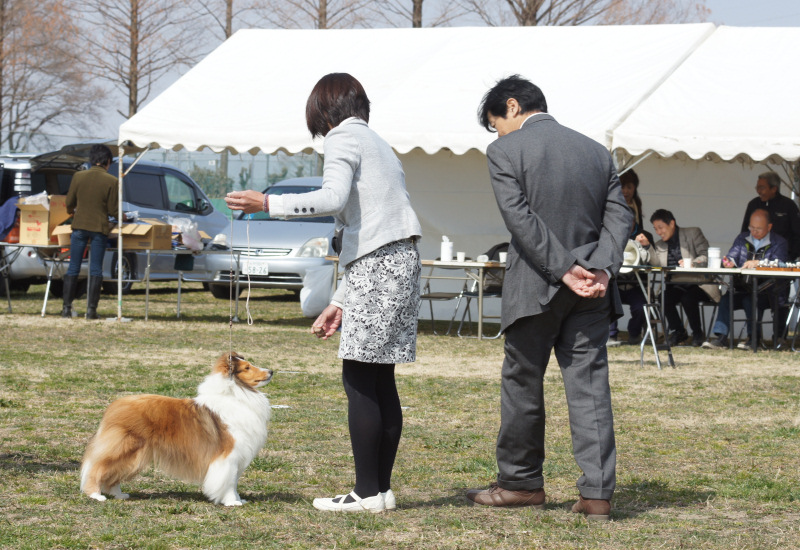 3.12 JCC 埼玉展_a0139367_23335243.jpg