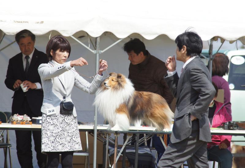 3.12 JCC 埼玉展_a0139367_2334546.jpg