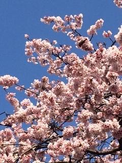 桜とメジロとガラス展_b0273973_00575379.jpg