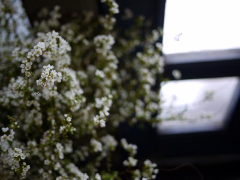 2017/03/08と3/10の店内の様子とお花。_b0171193_15364634.jpg