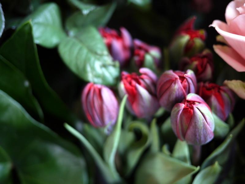 2017/03/08と3/10の店内の様子とお花。_b0171193_15371097.jpg