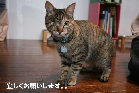 いちごちゃん 新生活スタート!_f0242002_00225770.jpg
