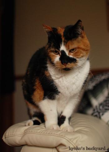 暖炉でスモアと、猫たちの反応_b0253205_07160157.jpg
