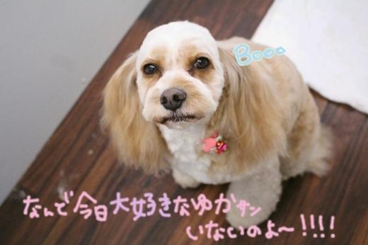 b0130018_20112101.jpg