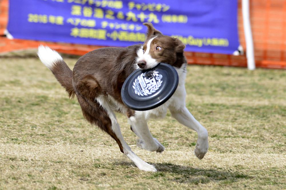 2017.3.12 全日本フリスビードッグ選手権 IN 栃木!<その2>_f0250322_2101099.jpg