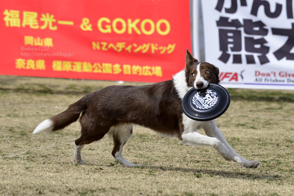 2017.3.12 全日本フリスビードッグ選手権 IN 栃木!<その2>_f0250322_21017100.jpg