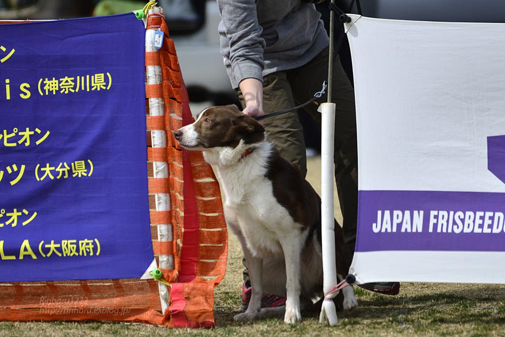 2017.3.12 全日本フリスビードッグ選手権 IN 栃木!<その2>_f0250322_2105883.jpg