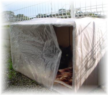 お客さんのご接待猫一番はひかりちゃん_d0355333_11164431.jpg
