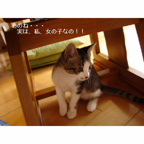 新ちゃん&紺ちゃん正式譲渡のお知らせ_d0355333_11270368.jpg