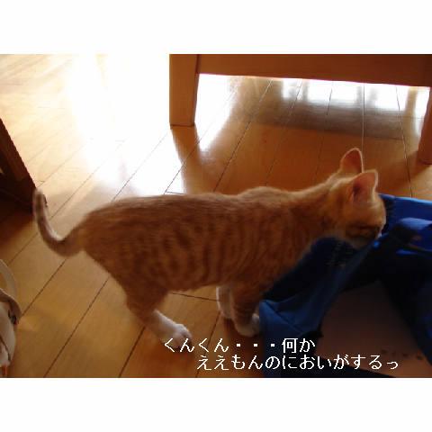新ちゃん&紺ちゃん正式譲渡のお知らせ_d0355333_11270409.jpg