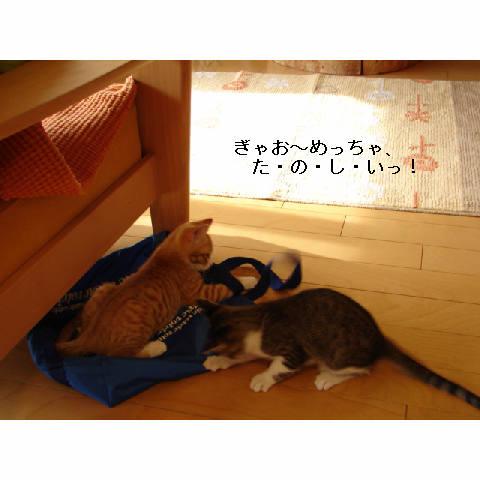 新ちゃん&紺ちゃん正式譲渡のお知らせ_d0355333_11270415.jpg