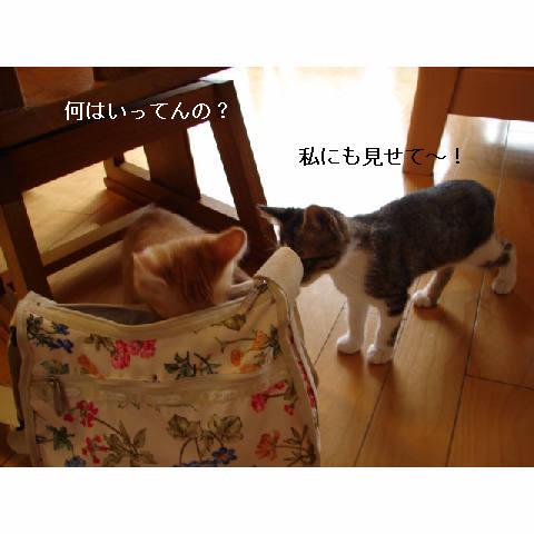 新ちゃん&紺ちゃん正式譲渡のお知らせ_d0355333_11270458.jpg