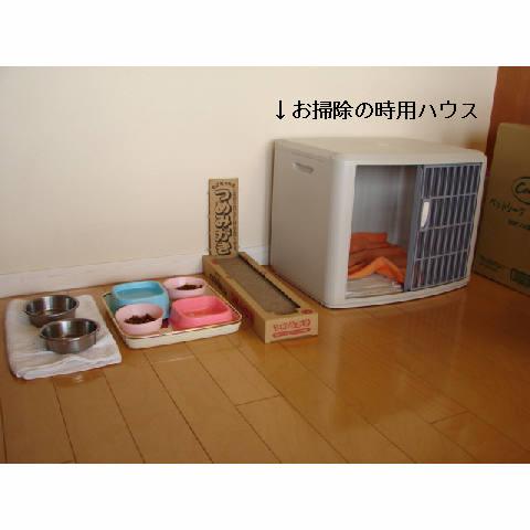 新ちゃん&紺ちゃん正式譲渡のお知らせ_d0355333_11270516.jpg