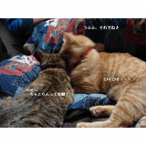 モテモテ♪_d0355333_11271695.jpg
