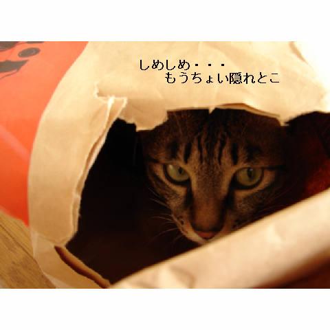かくれんぼ_d0355333_11272249.jpg