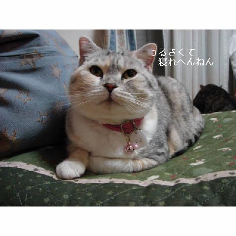 かわいいキャディさん_d0355333_14052187.jpg