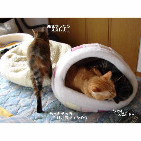かまくらベッド人気♪_d0355333_14052323.jpg