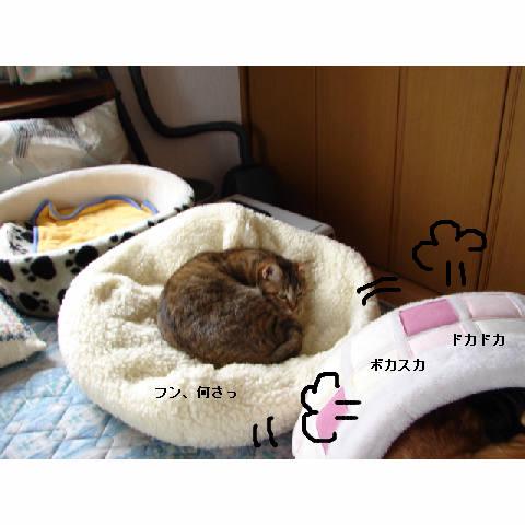 かまくらベッド人気♪_d0355333_14052332.jpg