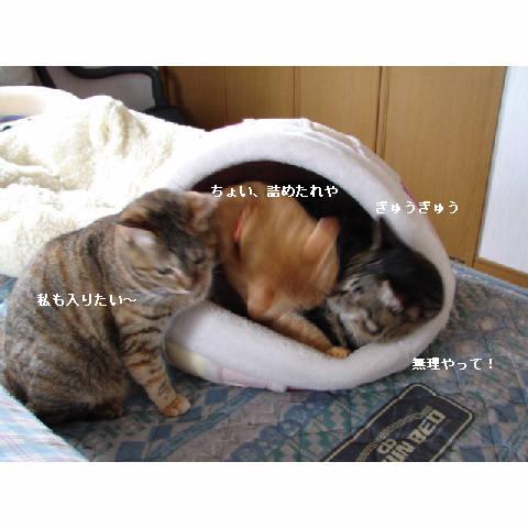 かまくらベッド人気♪_d0355333_14052338.jpg