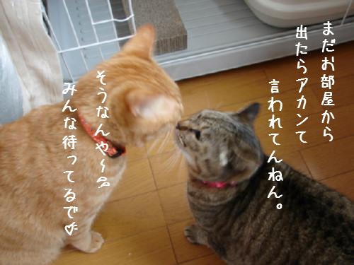 お友達になりたい_d0355333_14060647.jpg