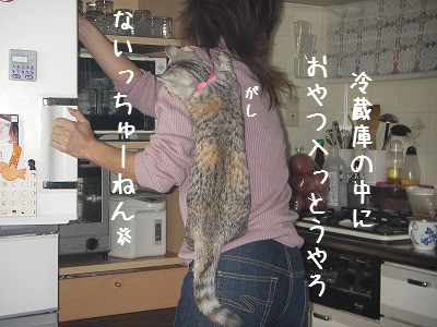 肩のり猫_d0355333_14060673.jpg