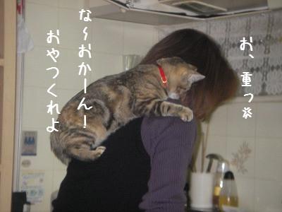 肩のり猫_d0355333_14060689.jpg