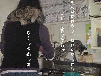 肩のり猫_d0355333_14060712.jpg